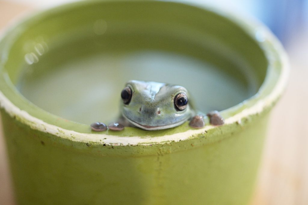 The frog in the well knows nothing of the great ocean 井の中の蛙大海を知らず